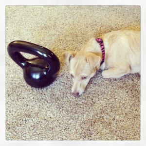 Holly the puppy dog loves to kettlebell!